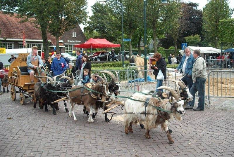 Goat Cart Plans DIY Free Download Woodworking Tools